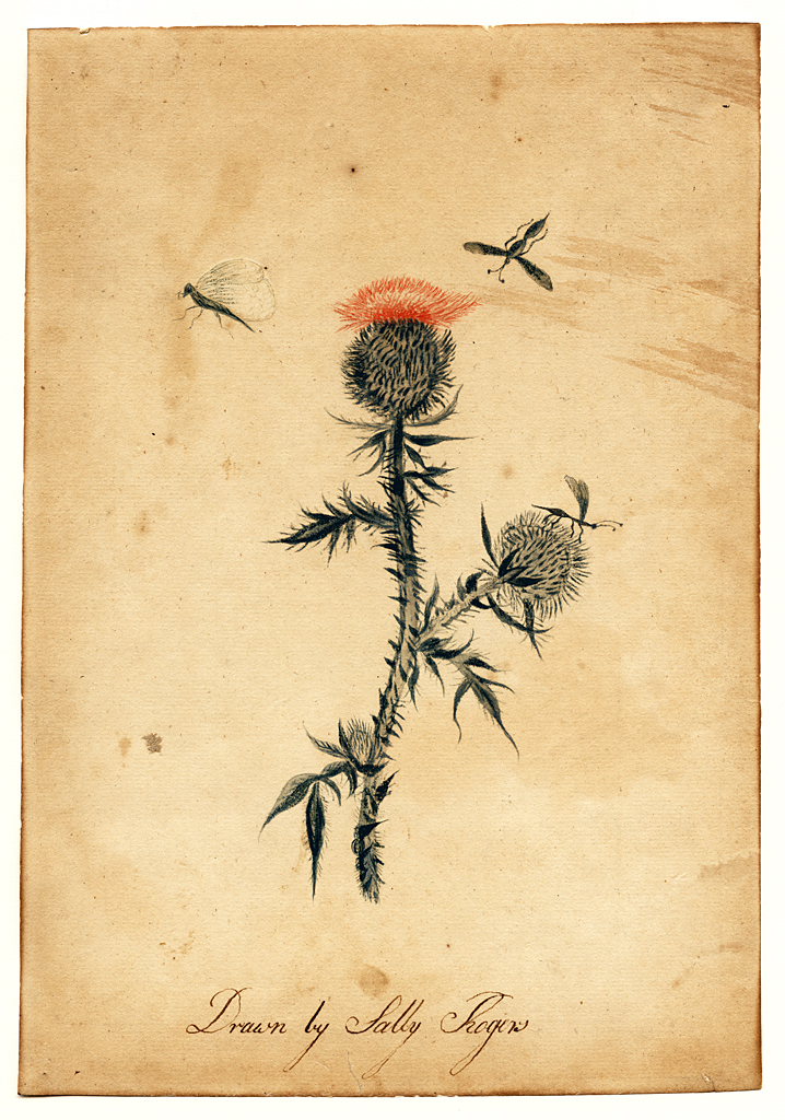 Watercolor of flower with insects flying above.