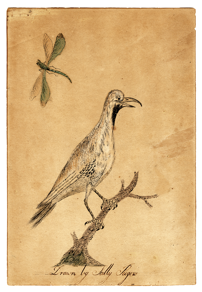 Water color of bird on twig with insects.
