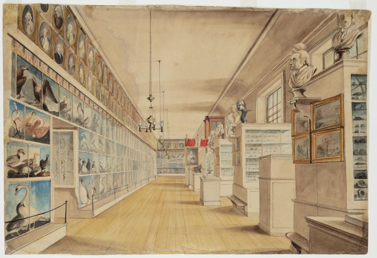 Water color painting of the main hall of the museum. On one wall are paintings - portraits and wildlife. On the other side are portrait busts.
